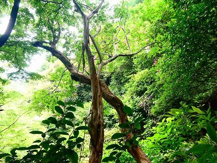 関口芭蕉庵で見つけた季節の写真を展示しています